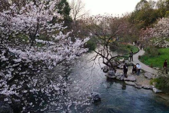 西湖美景三月天,春雨如酒柳如烟。杭州是个一整年都有好景致的城市,四季都有不同风情的美,春天的杭州美在生机,而春日里花红柳绿的太子湾公园则是整个杭州春色最浓郁的地方。   太子湾公园种有樱花500多株,樱花不算多,也没有密集种植的壮丽,但胜在整个公园都是背景,园中其他绽放的花朵郁金香、水仙花、风信子与樱花照相辉映,芳草茵茵,柳树婆娑,临河照花,留君花间住,一个公园就仿佛容纳了整个春天。   赏花时间:一般在三月下旬,四月上旬,今年的早樱现在已经开了   无门票 [上一页] [1] [2] [3]