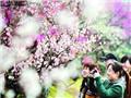 新浪上海街访:上海春天去哪儿赏花