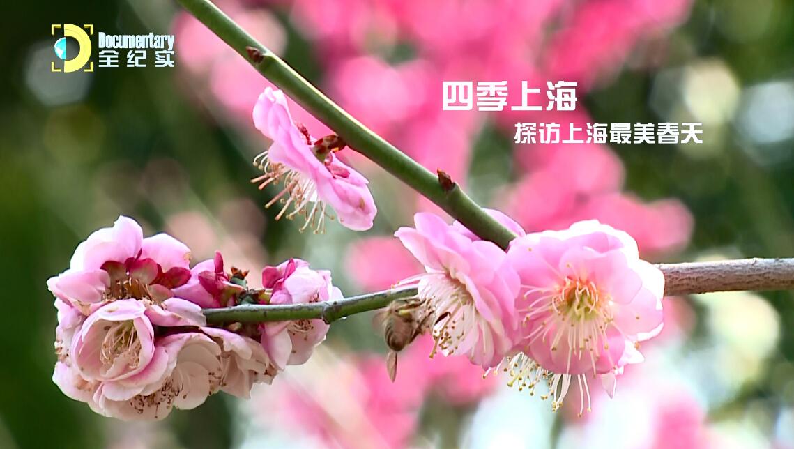 视频:四季上海 探访上海最美春天