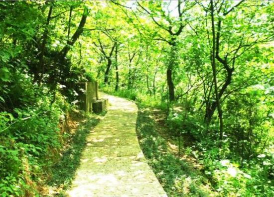 绿色森林图片手绘