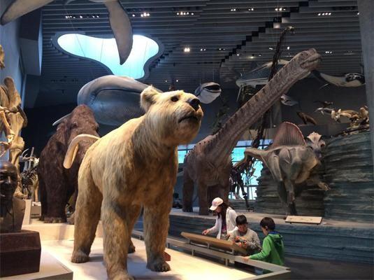上海自然博物馆新馆标本展