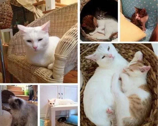 老板娘也很萌萌哒.特色主打各种可爱的猫咪.   爱猫萌妹子聚集地!