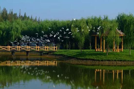 """躲进这座""""农林山庄"""",远离城市的喧嚣   明珠湖公园就在崇明岛的"""
