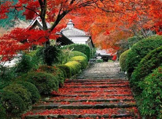醉你一秋红枫梦 中国最美枫叶之景推荐     南京栖霞山 看不尽的红枫