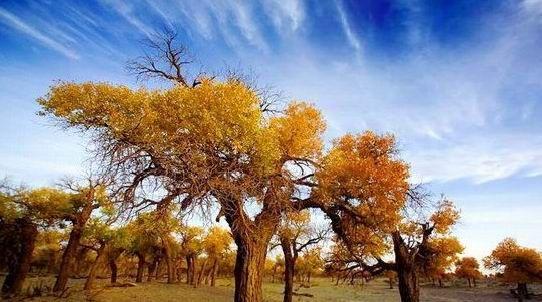 国内十大天然氧吧:新疆轮台_热门旅游景点_新浪上海