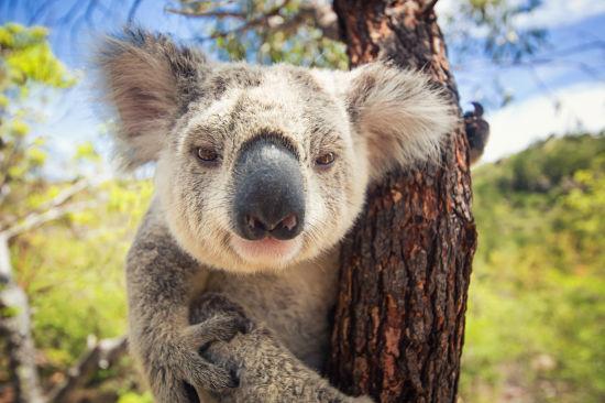 澳洲动物的图画