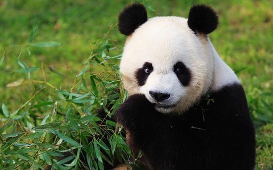 憨态可掬的国宝大熊猫宝宝们可爱呆萌,二百余种上万余只动物朋友们在
