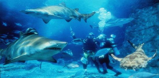 壁纸 海底 海底世界 海洋馆 水族馆 桌面 550_271