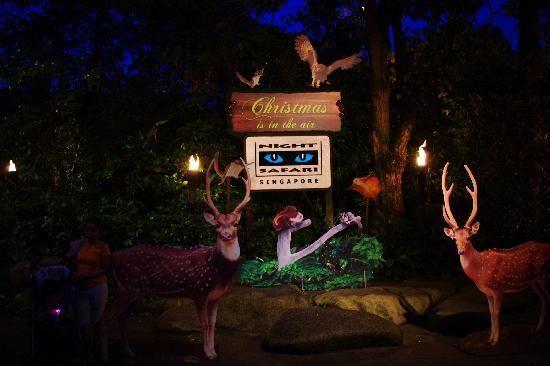 天黑请睁眼 盘点全球趣味夜间动物园