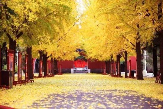 壁纸 风景 森林 桌面 550_366