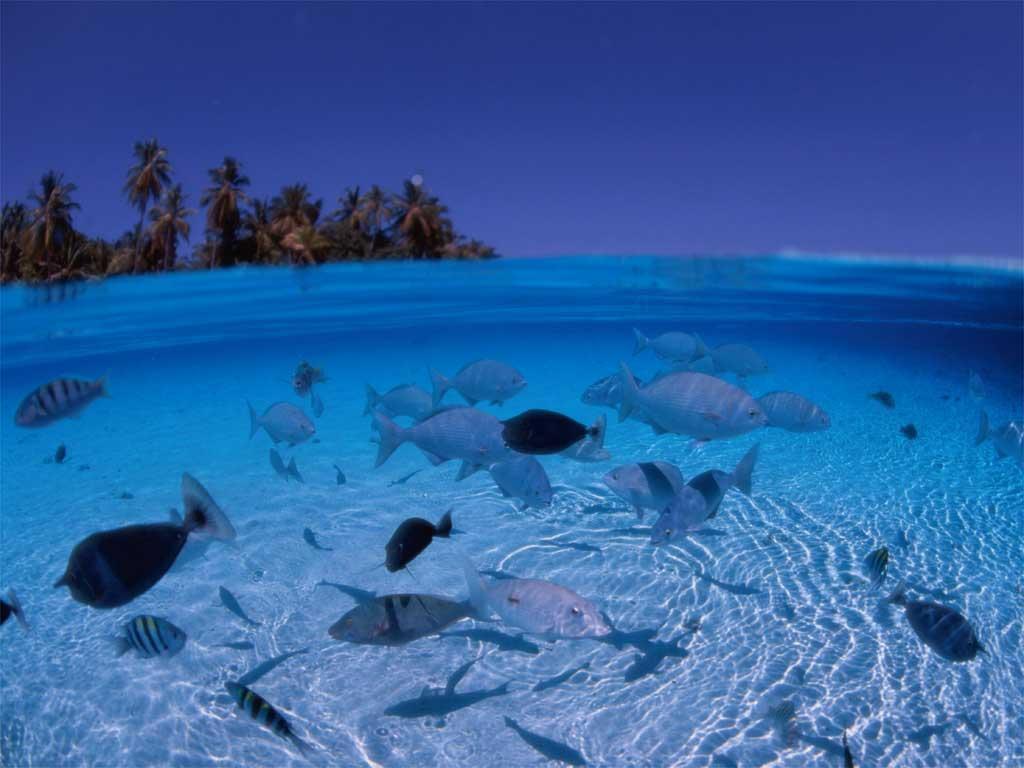 省钱省力详细攻略 带你玩转马尔代夫medhufushi岛