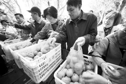 公园内,一元一斤的实惠价吸引了众多市民。 晨报记者 陈征 现场图片