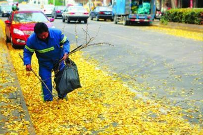 前日,闵行莘凌路上,一名环卫工在路边的银杏叶中捡拾枯枝和垃圾。王亚东 现场图片