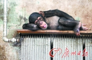 动物园里也开始供暖。(CFP供图)