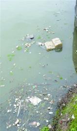 张家塘河道里随处可见垃圾