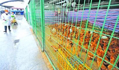 □昨日,三官堂活禽交易市场全场停业消毒。晨报记者 陈征