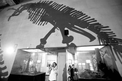 上海自然博物馆近日游客大增 /晨报记者 杨眉
