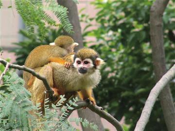 """动物园的猴子常遭游客""""调戏""""(资料图)"""