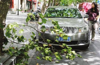 昨日,申城一些行道树的树枝被吹断。□解放日报 李一凡 摄