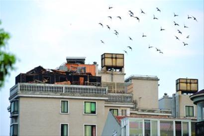 □鸽棚基本拆完,残余建筑材料等待清运。 /晨报记者 肖允
