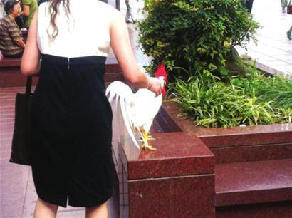 女子带一只白色公鸡在南京路步行街遛弯