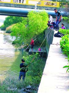 昨天,莲花南路桥下不少人跳下防汛墙捕鱼,场面让人心惊肉跳。   本报记者 张家琳 摄