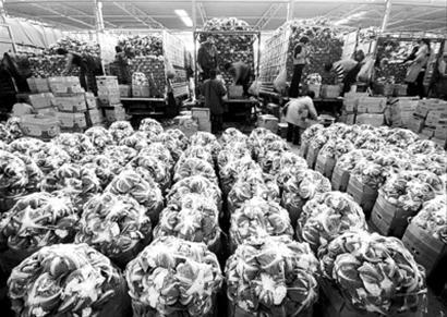 上海蔬菜集团下属的江桥蔬菜批发市场 /CFP