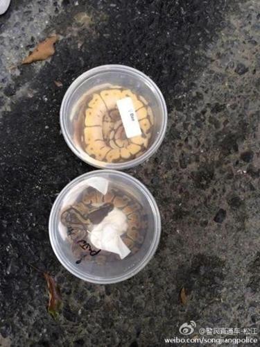 上海松江枫泾道口查获9条蟒蛇。来源:@警民直通车-松江