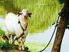 羊肥梨香醉农家