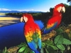 热带雨林野奢乐趣