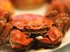 全国最名贵的蟹