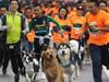 狗狗迷你马拉松