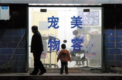 节假日上海宠物寻托养 正规店撤退催热私人寄养