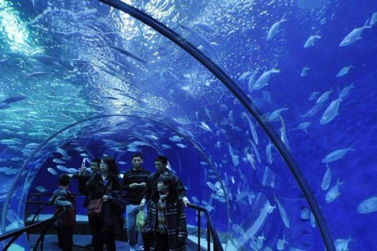 长风公园水族馆门票_上海海洋水族馆 长风公园海底世界-上海水族馆和长风海洋世界 ...