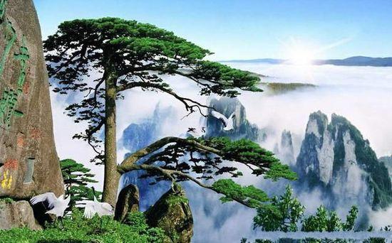 中国最有名旅游景点_外国人眼里中国最美的十个景点 安徽黄山_热门旅游景点_新浪上海